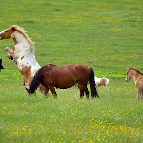 playing by Rima Biswas - Animals Horses ( ranch, nature, horses, fight, green, play, brown )