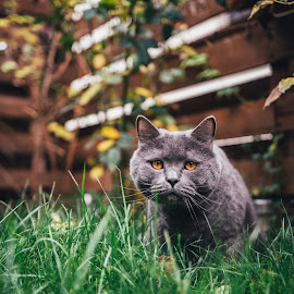 Jinky by Baltă Mihai - Animals - Cats Portraits ( cat, sweet, grass, outdoor, portrait, animal )