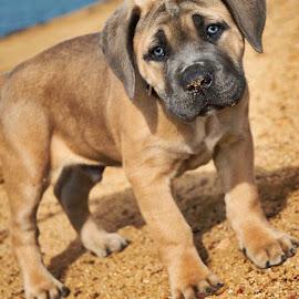 Hooch by Suzana Martin - Animals - Dogs Puppies