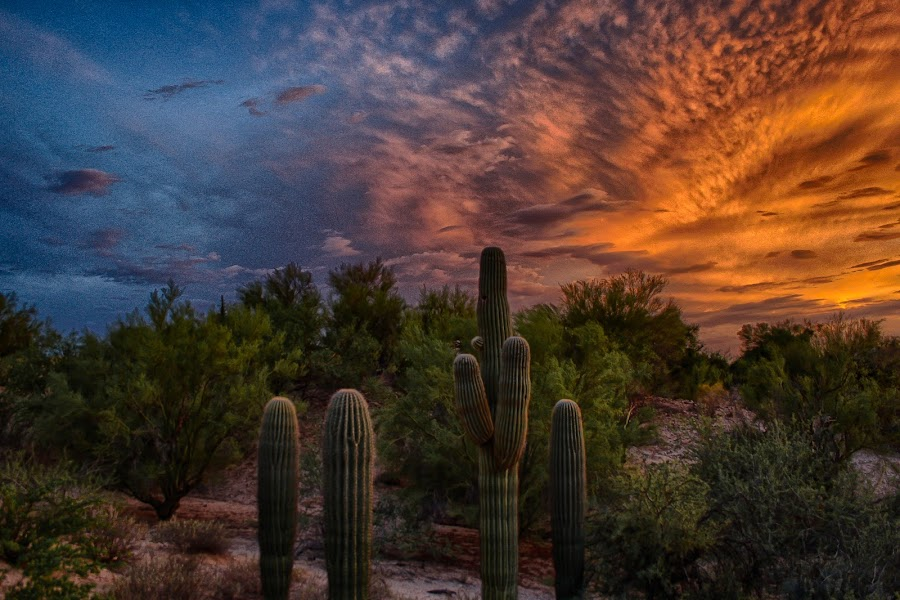 Sunset Over Tucson by Charlie Alolkoy - Landscapes Deserts ( clouds, sky, desert, sunset, arizona, tucson, cactus )