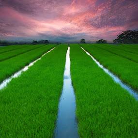 go green by Rodrigo Layug - Landscapes Prairies, Meadows & Fields ( nature, sunrise, landscape, fields )
