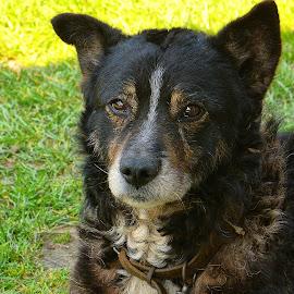 Georgel by Macinca Adrian - Animals - Dogs Portraits (  )