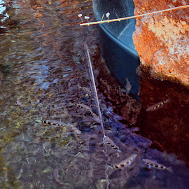 memanah makanan by Daril Sugito - Animals Fish