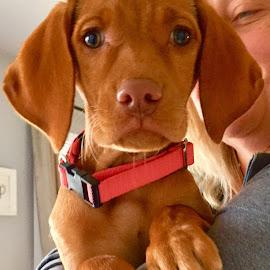 Cinnamon  by Debbie Squier-Bernst - Animals - Dogs Puppies (  )