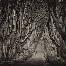 Dark Hedges by David Crawford - Landscapes Forests ( canon, uk, hedges, ireland, 70d, trees, dark hedges, northern ireland, landscape, ballymoney, game of thrones, lane )