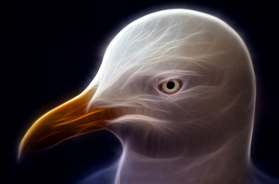 Eye of the Gull by Alex Graeme - Digital Art Things