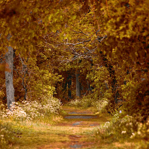 the autumn path.jpg
