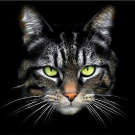 My cat by Laroy Rony - Animals - Cats Portraits