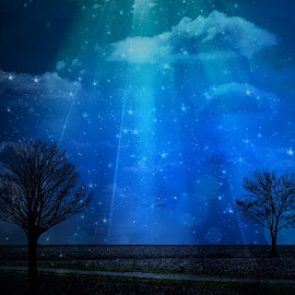 The Road Between Us by T Sco - Landscapes Prairies, Meadows & Fields ( sky, blue sky, tree, stars, trees, night, road, evening )