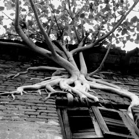 Parasite by Jhilam Deb - Artistic Objects Other Objects ( old house, window, black & white, parasite, artistic objects,  )
