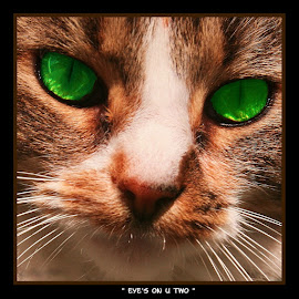 { Eye's On U Two } by Jeffrey Lee - Animals Other Mammals ( close ups of cats face, cats eyes, kitycats, green eyes, cats with intense eyes )