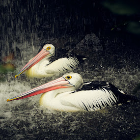 by Dharman Multimedia - Animals Birds
