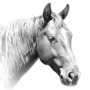 Horse Washout B12.JPG