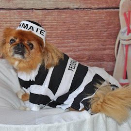 Pooch in Prison by Terry Linton - Animals - Dogs Portraits