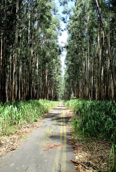 An Old Tree-Lined Road