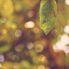 by Elizabeth Loera - Nature Up Close Leaves & Grasses ( idaho, macro, green, summer, leaves, photography )