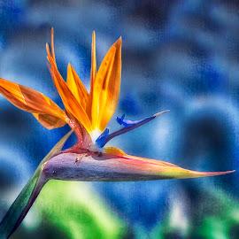 Bird of Paradise by Joan Sharp - Digital Art Things ( orange, green, blue, blue digital art background, bird of paradise, flower )