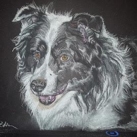 Fluffy border collie by Lyndsay Hepburn - Drawing All Drawing ( dogpastelportrait, bordercolliepastelportrait, bordercolliedrawing )