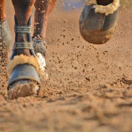 Horse legs by Kotagauni Srinivas - Sports & Fitness Other Sports ( horse legs, horse jump sport, horse, sports, running,  )