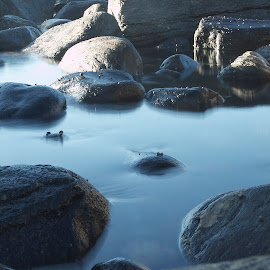 Stille vann by Per Alnes - Nature Up Close Water