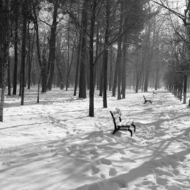 Park BW by Oana Stefana - City,  Street & Park  City Parks ( winter, park, fog, black and white, snow,  )