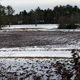 Cranberry Bog in Winter by Kristine Nicholas - Novices Only Landscapes ( winter, cold, ice, snow, trees, snowy, edaville, crannberry, landscape )