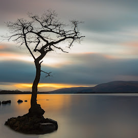 Milarrochy Bay by Diane Maxwell - Landscapes Waterscapes ( water, scotland, tree, loch lomand, sunset )
