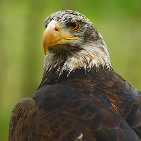 He is proud by Gérard CHATENET - Animals Birds