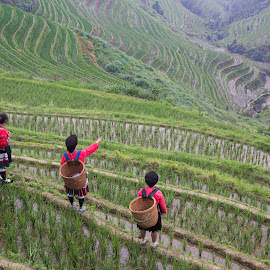 Rice Filed girls by Sherry Zhao - Landscapes Travel ( hills, mountain, village, places, travel, landscape )