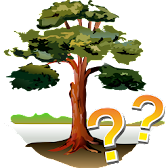 Trees - Quiz APK Icon