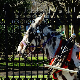 Painted Horse by David Walters - Animals Horses ( new orleans, colors, street, horse, french quarter )