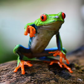Hi ... come here ... by Ajar Setiadi - Animals Amphibians