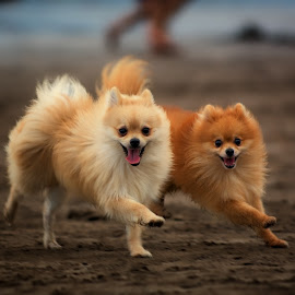 Be Happy by Max Bowen - Animals - Dogs Running (  )