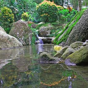 I see u by Mohd Rashidin Ideres - Nature Up Close Gardens & Produce ( tea garden, japanese garden, bukit tinggi, berjaya hills, colmar tropicale, garden )