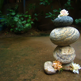 zen stones by Shreya Bansal - Novices Only Objects & Still Life ( water, nature, still life, greenery, outdoor, zen, stones, flowers, objects, flower )