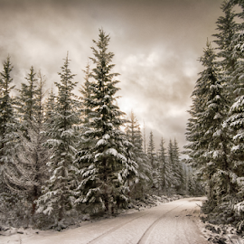 by Trisha Payne - Landscapes Forests (  )