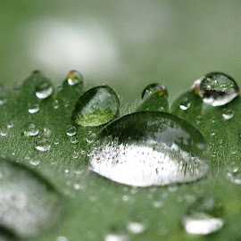 by Stanley P. - Nature Up Close Natural Waterdrops