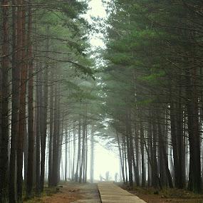 Recreation by Dalia Račkauskaitė - Landscapes Forests ( the forest, people, mist )