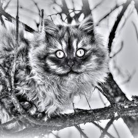 by Iveta Franzová - Animals - Cats Portraits
