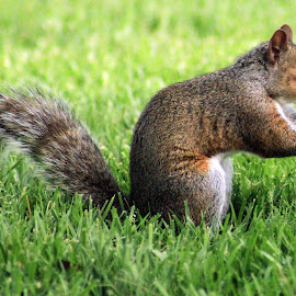 Squrriel Wishing For Some Nuts by Jesse Howard - Animals Other Mammals ( 7dtest )