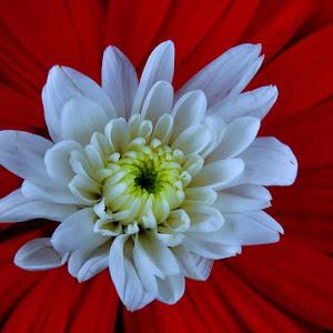 flowers_793 pix.jpg