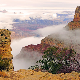 Grand Inversion by Dave Walters - Landscapes Cloud Formations ( cloud inversion, nature, lumix fz200, trees, landscapes, rocks, grand canyon,  )