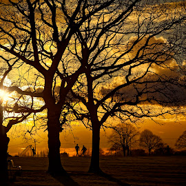 Footy in the park by Barry Jones - City,  Street & Park  City Parks ( tree, park, sunset, parks, trees )
