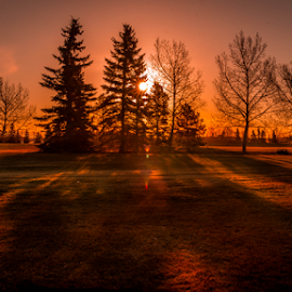 Millwood city Park by Joseph Law - City,  Street & Park  City Parks ( building, millwood, bushes, morning glory, trees, sunshine, edmonton, city park, shadows )