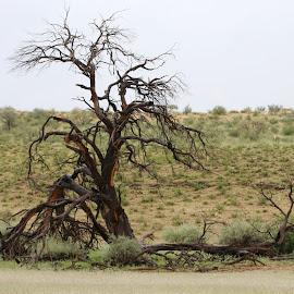 by Lanie Badenhorst - Landscapes Deserts