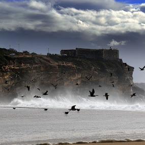 North beach by Gil Reis - Landscapes Beaches ( beaches, sand, nazaré, nature, waves, sea, places )