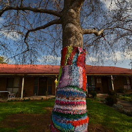 Winter Ready by Kamila Romanowska - Artistic Objects Other Objects ( winter, tree, australia, mclaren vale, knit, scarf )