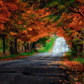 Colors of Autumn by Dragan Milovanovic - Uncategorized All Uncategorized (  )