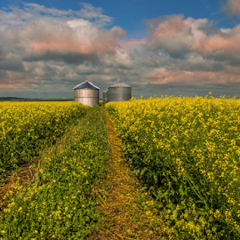 Colona Oil Fields by Joseph Law - Landscapes Prairies, Meadows & Fields
