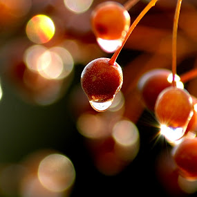 SPARKLE! by Steve Cooper - Food & Drink Fruits & Vegetables ( glint, cold, light, berries )